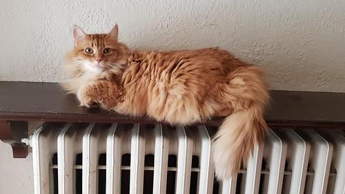 Hillary above radiator