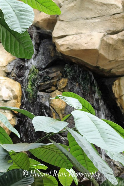 Phipps Conservatory  (100)
