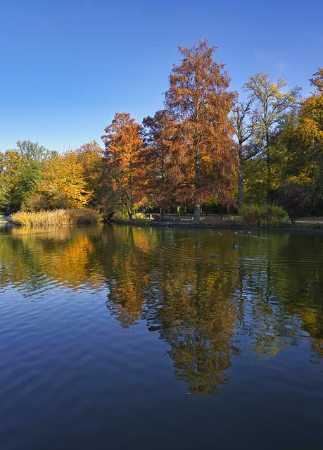 Sumpfzypressen im Herbstkleid