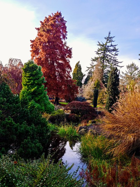Beautiful colors as the sun breaks through the clouds this afternoon in the large Quarry Garden in Queen Elizabeth Park.