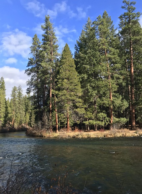 Autumn Afternoon Along the Metolius