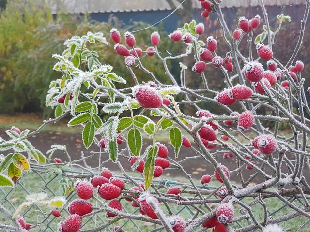 November im Oberschwäbischen Hausgarten -  November in the Upper Swabian home garden - Novembre dans le jardin de la maison souabe supérieure