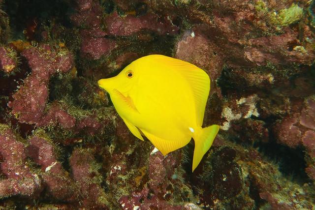 curious yellow