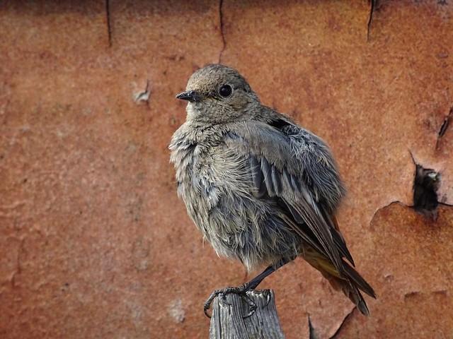 Halte das Glück wie einen Vogel, so leise und lose wie möglich 💕