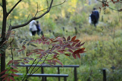 autumn tokyo japan landscape