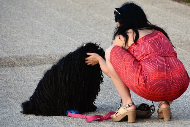 Un perro con su dueña / A dog with its owner