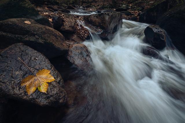 Autumn at the stream Ilse