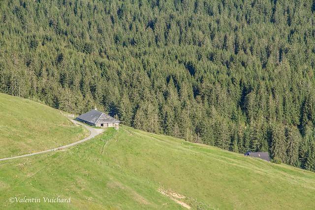 SF-_MG_3504 - La Guisolanda, alpine pasture farm, Gruyère region - Switzerland
