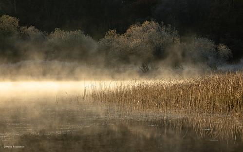2019 centrallakes lakedistrict elterwater lake water mist misty light lakeland england uk nature landscape coppercloudsilvernsun