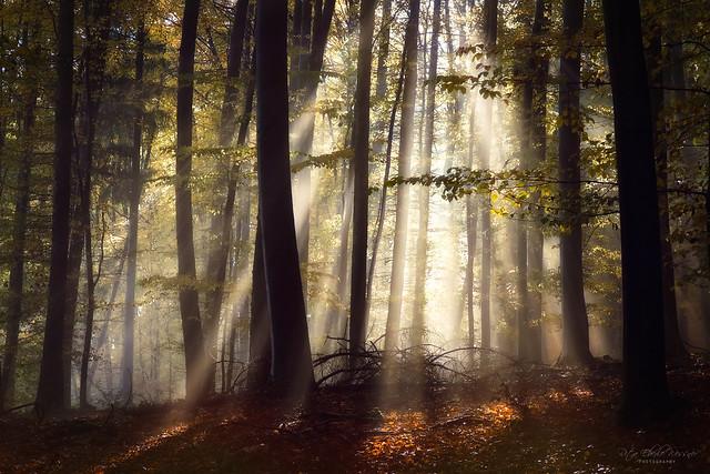 autumn's chords