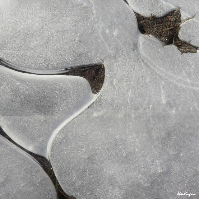 Puddle ice abstract - Abstrait d'une flaque d'eau