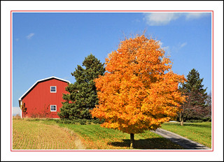 Autumn Gold and Barn Red