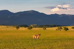 Sustainable Wildlife Management Programme