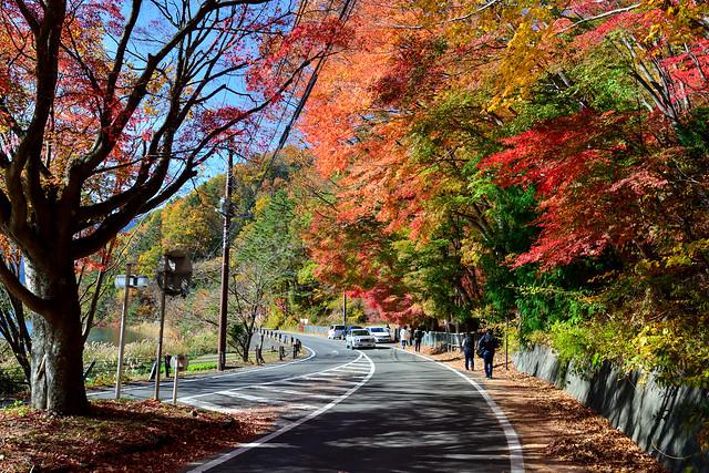 Autumn Maples , 河口湖,紅葉隧道
