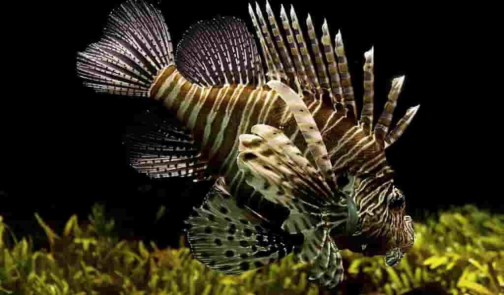 les-poissons-peuvent-évaluer-les-distances-comme-les-autres-animaux