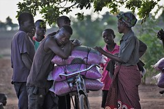 Ready for the Rain: A family loads certified groundnut seed - part of an input loan package - on their bicycle