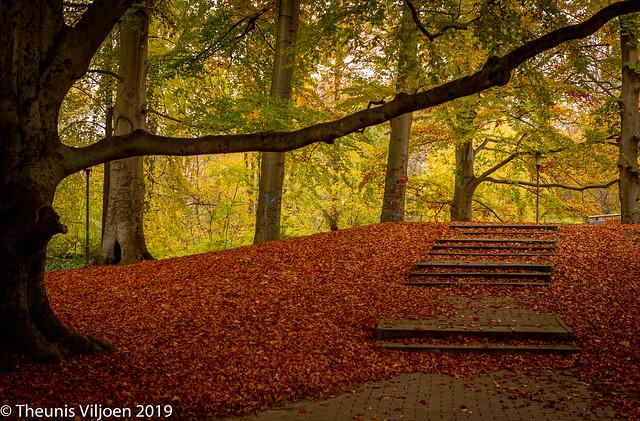 Autumn light - VIII