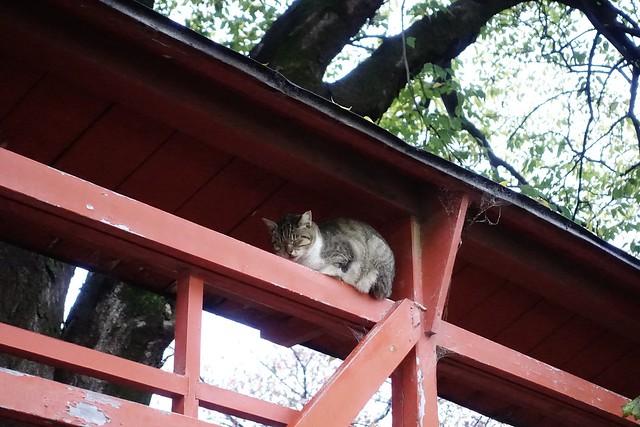 Today's Cat@2019-11-14