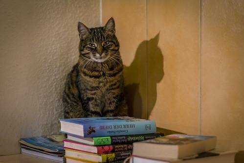 Literaturkatze -  read cat