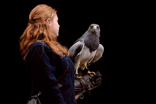 Of Queens and Kings | Sea Eagle