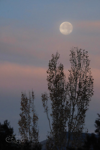 moon fullmoon sunset evening sky tree trees clouds pastel