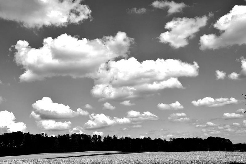 Landscapes Feldbrunnen 14.07 (5)