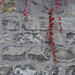 """<p><a href=""""https://www.flickr.com/people/bbonthebrink/"""">bbonthebrink</a> posted a photo:</p>  <p><a href=""""https://www.flickr.com/photos/bbonthebrink/49065265518/"""" title=""""191114a4""""><img src=""""https://live.staticflickr.com/65535/49065265518_94a85d1bdf_m.jpg"""" width=""""240"""" height=""""240"""" alt=""""191114a4"""" /></a></p>"""