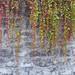 """<p><a href=""""https://www.flickr.com/people/bbonthebrink/"""">bbonthebrink</a> posted a photo:</p>  <p><a href=""""https://www.flickr.com/photos/bbonthebrink/49065265748/"""" title=""""191114a1""""><img src=""""https://live.staticflickr.com/65535/49065265748_f75d5b1214_m.jpg"""" width=""""240"""" height=""""240"""" alt=""""191114a1"""" /></a></p>"""