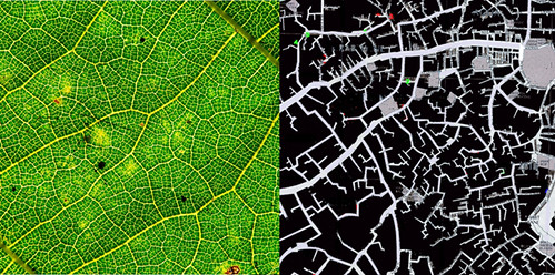 Leaf Veins and Fez Medina street map (partial)