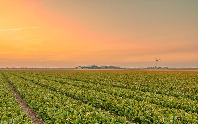 Pastellic pastoral Holland.