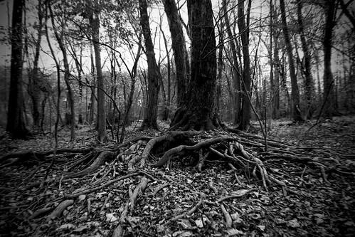 Devourer in the Woods