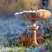 cold fungi