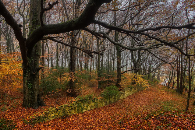 Cotswold woodland at the end of Autumn