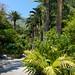 Menton,Jardin botanique du Val Rahmeh (France)