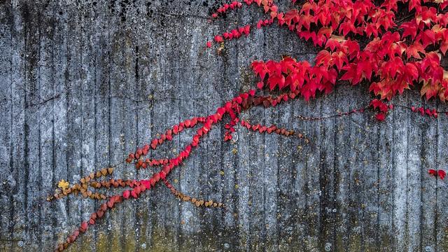 Nature meets concrete