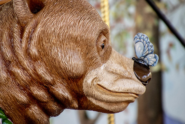 2019-09-21 Hello butterfly, says the bear!