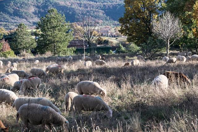 Haute Provence, Mallefougasse, 115