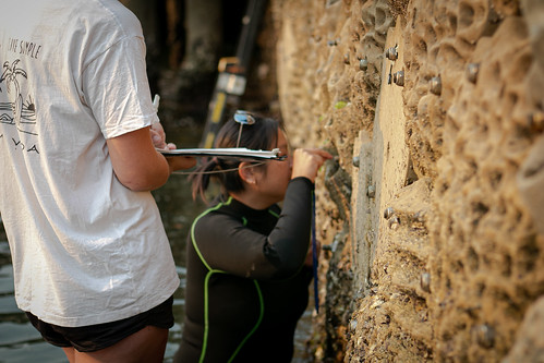 Living Seawall Tiles Up Close