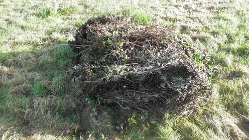 compost heap Nov 19