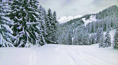 SWITZERLAND - Alps