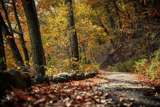 Walk with me. Feel the Autumn breeze live it's colors..