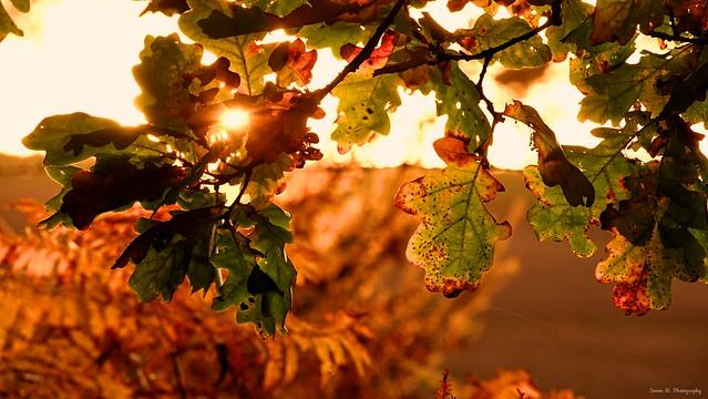 Autumn Glow. Nov 2019
