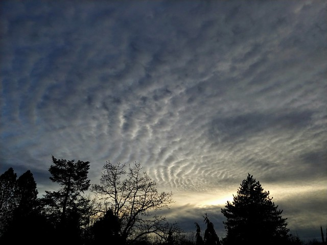 Another day, another tough choice to make. I really like the way the clouds looked late this afternoon as I left VanDussen Gardens to walk home.