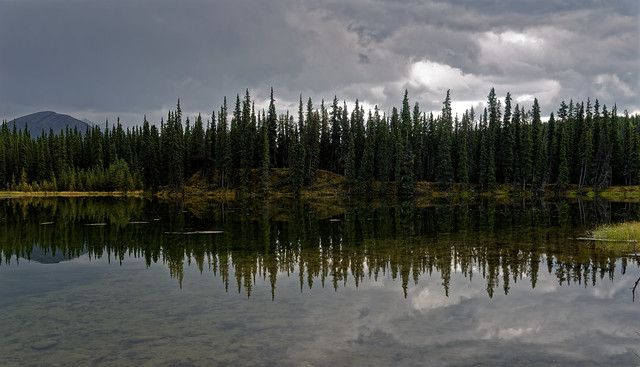 Reflections of Forest of Trees (Denali National Park & Preserve)