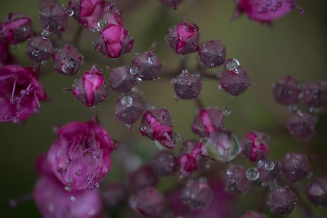 Tiny drops