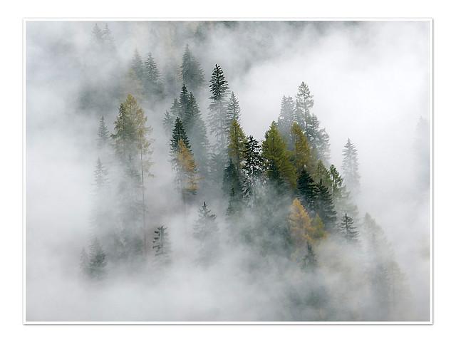 Bäume, wolkenverhangen