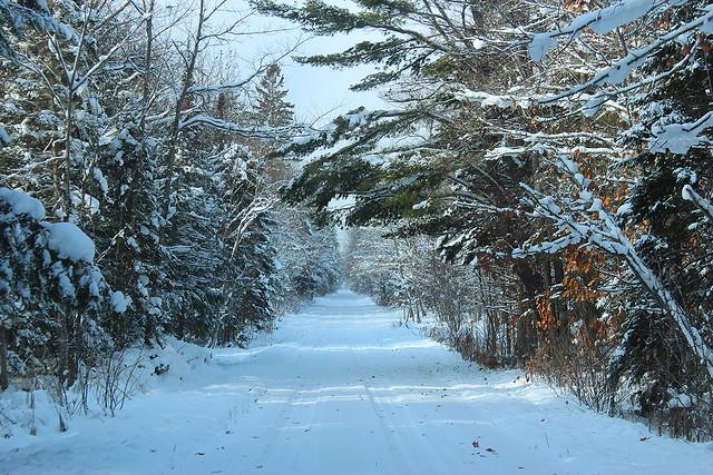 Snowy Glory