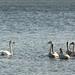 Loch Leven, 14th Nov