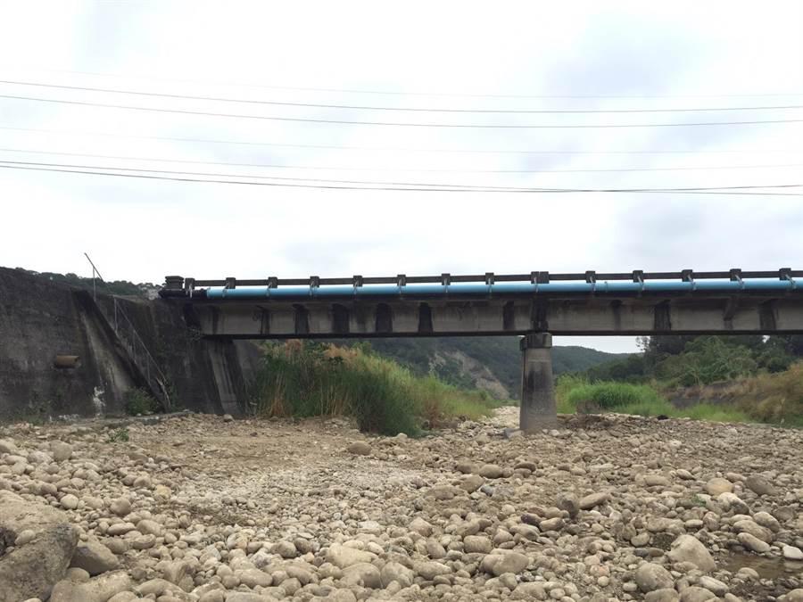 本月2日下午在苗130線與苗50-1交界處,橋下左邊階梯旁,發現1隻受傷的公石虎。圖片來源:苗栗縣政府農業處提供。