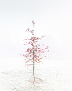 The Lonesome Tree